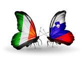 翼の上のアイルランドおよびスロベニアのフラグと蝶 — ストック写真