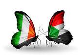 翼の上のアイルランドとスーダンのフラグと蝶 — ストック写真