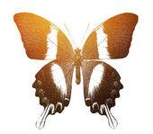 Golden butterfly — Stock Photo