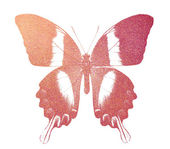 Red butterfly — Stock Photo