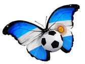 Butterfly with Argentina flag and ball — Foto Stock