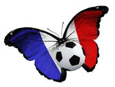 Butterfly with French flag and ball — Foto de Stock