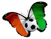 Butterfly with Cote Divoire flag and ball — Stock Photo