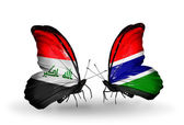 Butterflies with Iraq and  Gambia flags — Stock Photo