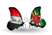 Butterflies with Iraq and Dominica flags — Stock Photo