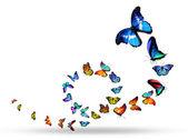 Loop of colorful butterflies — Foto de Stock