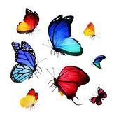Bright butterflies — Foto de Stock