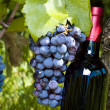 A bottle of red vine, grapes and vineyard — Stock Photo