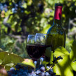 A bottle of red wine in the wineyard — Stock Photo