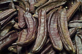 The Carob (Ceratonia siliqua) — Stock Photo