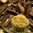 Stock Photo: Carob (Ceratonisiliqua)