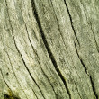 Stock Photo: Old tree texture