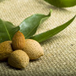 Stock Photo: Almonds (kernel and leaves)