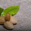 Almonds with kernel and leaves — Stock Photo #14073349