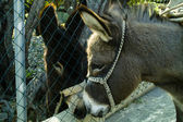 Donkey Love — Stock Photo