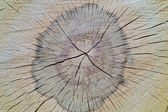 Buk drzewo tekstura — Zdjęcie stockowe
