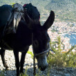 Donkey carrying backpacks — Stockfoto #14080222