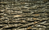 Old wood cracked texture — Stock Photo
