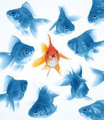 Difference by goldfish — Stock Photo