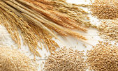 Cereals and grains — Stock Photo
