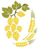Hop and wheat — Stock Photo