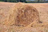 Bale of hay in the field — Stock Photo