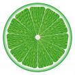 Lime circle — Stock Vector