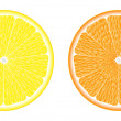 Orange and lemon — Stock Vector