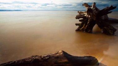 Time lapse snag on beach — Stock Video