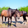 Two young horses on background of rural landscape — Stock Photo