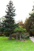 Various trees in city park vertical — Stock fotografie
