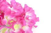Flower on white background — Stock Photo