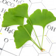 Gingko - Stock Photo