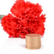 Red carnation and coin — Stock Photo
