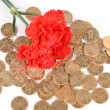 Carnation and coin — Stock Photo #13149107