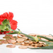 Carnation and coin — Stock Photo
