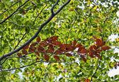 Folhas coloridas, na árvore de outono — Foto Stock