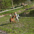 Two dogs playing — Stock Photo #20805351