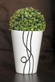 Green plant in narrow ceramic planter — Stock Photo
