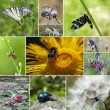 Stock Photo: Mix of insect and flowers