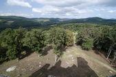 Skog och skuggan av slottet på ängen — Stockfoto