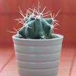 Little prickly cactus in a pot — Stock Photo
