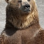 Standing brown bear — Stock Photo #25239909