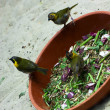 Foto Stock: Hungry birds are fed
