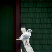 Seagull sitting on a handrail — Stock Photo