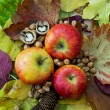 Stock Photo: Apples, autumn leaves, pine cone and nuts