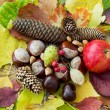 Apple, autumn leaves, horse chestnut, pine cones, rosehip and nu — Stock Photo