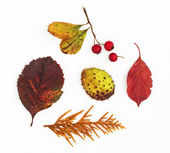 Autumn leaves, rosehip, horse chestnut and twig — Stock Photo
