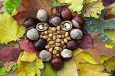 Autumn heart of horse-chestnuts, walnuts and hazelnuts — Stock Photo