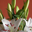 Beautiful bouquet of white lilies — Stockfoto #34126643
